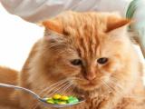 Витамины в рационе домашних животных