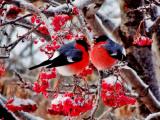 Чем подкармливать диких птичек зимой и как это правильно делать