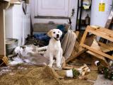 Как мы учим собак «плохому» поведению
